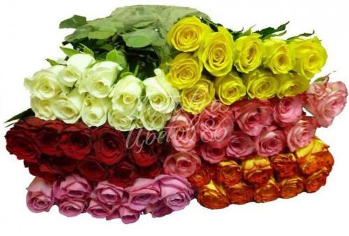 Роза Кения. 40см