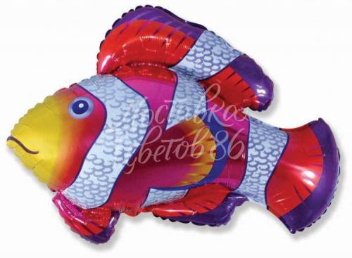 """Шар фигура """"Клоун-рыбка"""""""