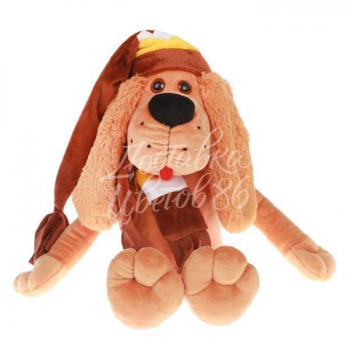Пес Бруно в коричневой шапке