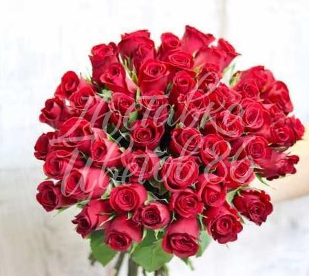 Роза Кения красная 25 штук